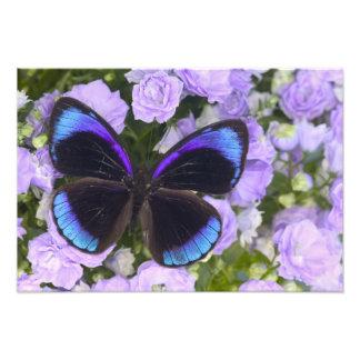 蝶2のSammamishワシントン州の写真 フォトプリント