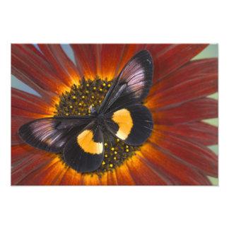 蝶25のSammamishワシントン州の写真 フォトプリント