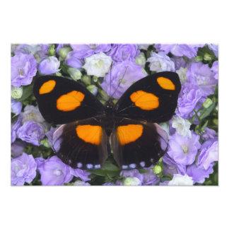蝶3のSammamishワシントン州の写真 フォトプリント
