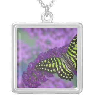 蝶31のSammamishワシントン州の写真 シルバープレートネックレス