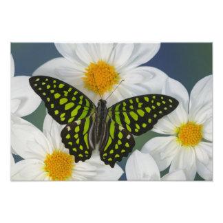 蝶35のSammamishワシントン州の写真 フォトプリント