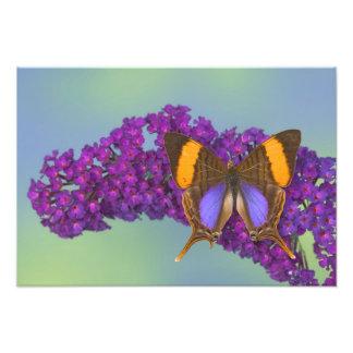 蝶36のSammamishワシントン州の写真 フォトプリント