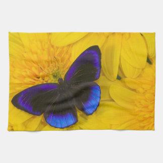 蝶41のSammamishワシントン州の写真 キッチンタオル
