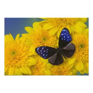 蝶41のSammamishワシントン州の写真 フォトプリント