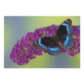 蝶45のSammamishワシントン州の写真 フォトプリント