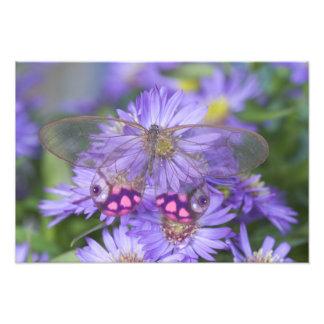 蝶46のSammamishワシントン州の写真 フォトプリント
