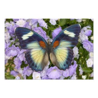 蝶5のSammamishワシントン州の写真 フォトプリント
