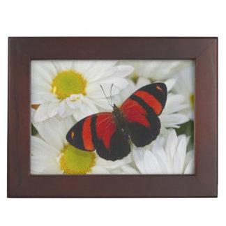 蝶51のSammamishワシントン州の写真 ジュエリーボックス