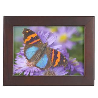 蝶54のSammamishワシントン州の写真 ジュエリーボックス