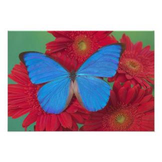 蝶55のSammamishワシントン州の写真 フォトプリント
