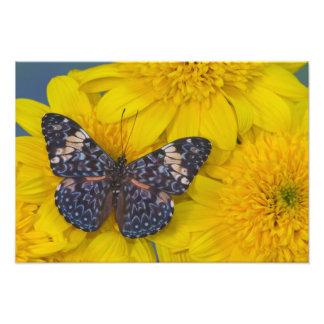 蝶56のSammamishワシントン州の写真 フォトプリント