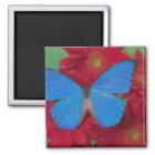 蝶56のSammamishワシントン州の写真 マグネット