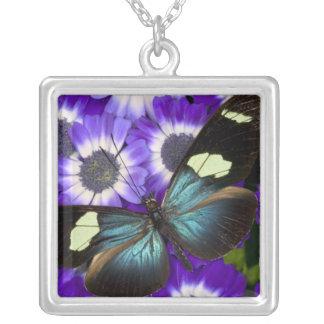 蝶6のSammamishワシントン州の写真 シルバープレートネックレス
