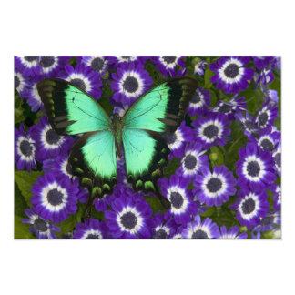 蝶6のSammamishワシントン州の写真 フォトプリント