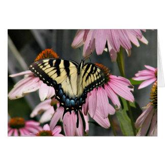 蝶 カード