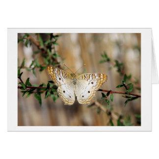 蝶 グリーティングカード