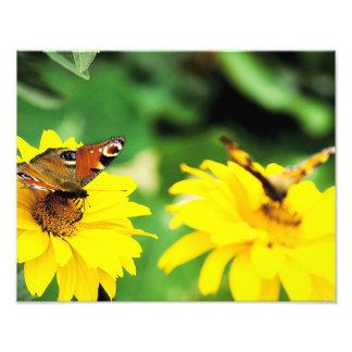 蝶-写真 フォトプリント