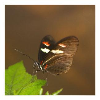 蝶-近い上り フォトプリント