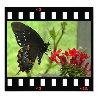 蝶pipevineのアゲハチョウ(側面) フォトプリント