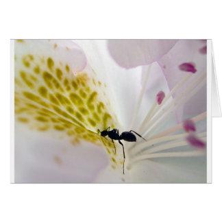蟻のマクロ-空白のなカード カード