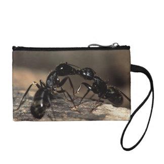 蟻の接吻 コインパース