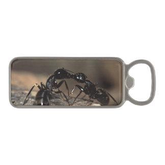 蟻の接吻 マグネット栓抜き