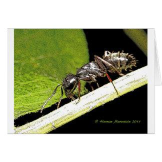 蟻b カード
