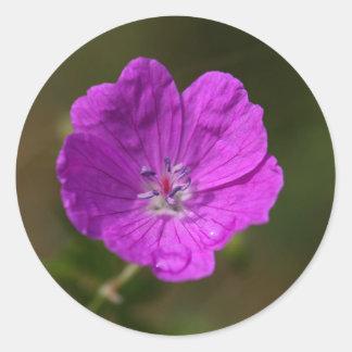 血のゼラニウムの花 ラウンドシール