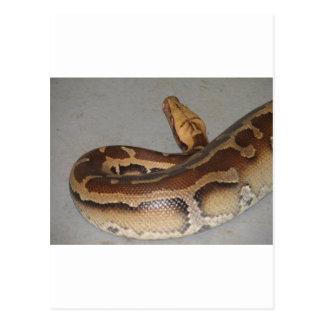 血の大蛇 ポストカード