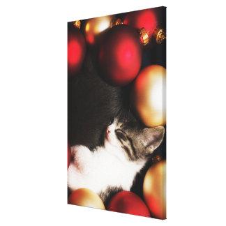装飾で眠っている子ネコ キャンバスプリント