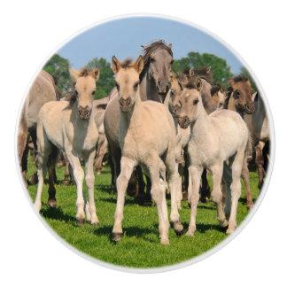 装飾的な群れのDulmenの野生の馬のかわいい子馬- セラミックノブ