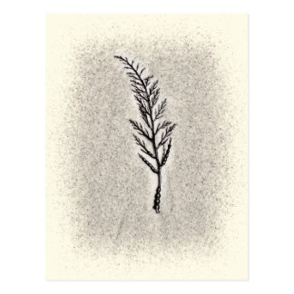 装飾的な藻 ポストカード