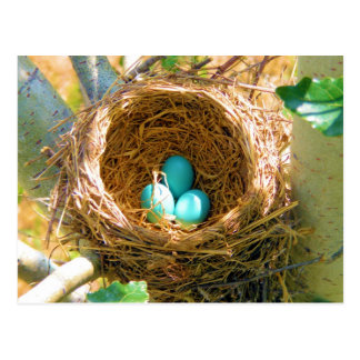 裏庭の木の巣のロビンの卵 ポストカード