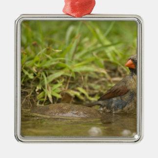 裏庭の池の北の(鳥)ショウジョウコウカンチョウ、 メタルオーナメント