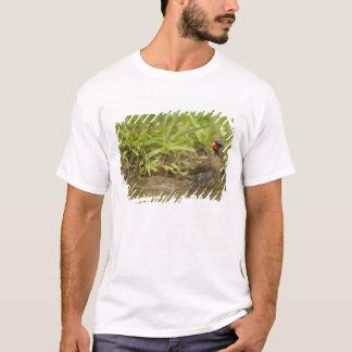 裏庭の池の北の(鳥)ショウジョウコウカンチョウ、 Tシャツ