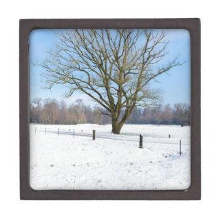 裸の木および青空とのSnowyの冬の景色 ギフトボックス
