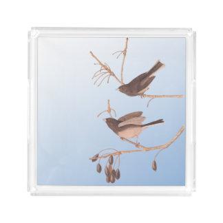 裸の枝の暗目のユキヒメドリのAudubonの雪の鳥 アクリルトレー