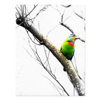 裸の枝の美しい鳥か紛砕機のBarbet ポストカード