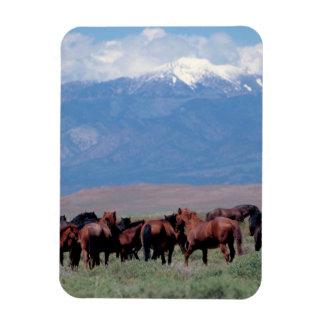 西の野生の馬 マグネット