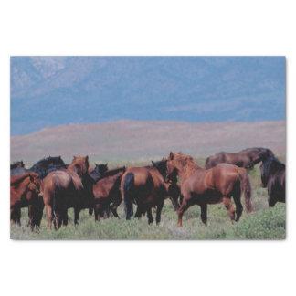 西の野生の馬 薄葉紙