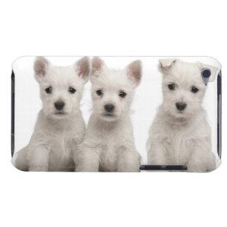 西の高地テリアの子犬(7週古い) Case-Mate iPod TOUCH ケース