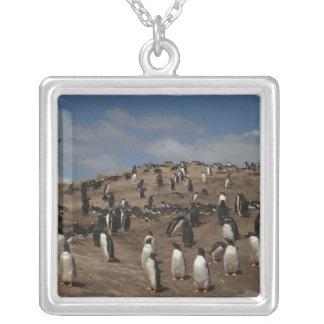 西のGentooのペンギン(Pygoscelisパプア)のコロニー シルバープレートネックレス