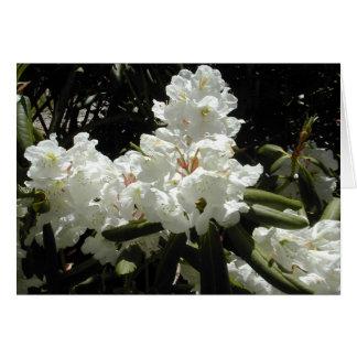 西海岸の花 カード