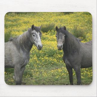 西部のアイルランドでは、長くの2頭の馬 マウスパッド