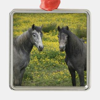 西部のアイルランドでは、長くの2頭の馬 メタルオーナメント