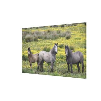 西部のアイルランドでは、長くの3頭の馬 キャンバスプリント