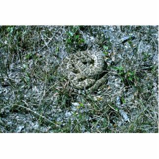 西部のダイヤガラガラヘビ 写真彫刻(台付き)