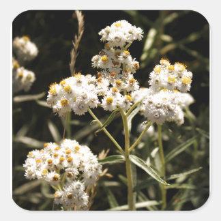 西部の真珠のような永遠に続く花の写真 スクエアシール