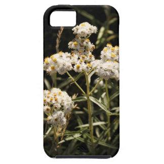 西部の真珠のような永遠に続く野生の花の写真 iPhone SE/5/5s ケース