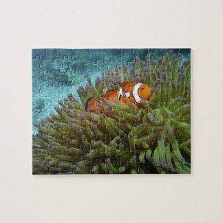 西部のClownfish (Amphiprionのocellaris)、 ジグソーパズル